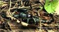 עקרבים בעולם הטבע