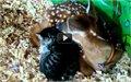 חתול צבי, החברים הכי טובים