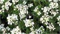 הפריחה המדהימה באזור נחל אדוריים