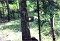 כלב שיודע להיתפס על עצים