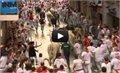 מרדף השוורים 2012. ותראו מה קורה לקראת הסוף