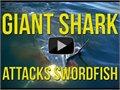 איש נגד כריש - מי ינצח?