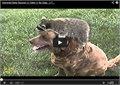 רקון מאוד אוהב לשחק עם כלבים