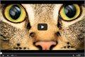 תראו איך בעלי חיים רואים את העולם