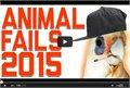 אוסף בעלי חיים הכי מציחים של 2015