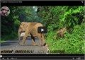 פיל חוסם את הכביש לטובת משפחתו