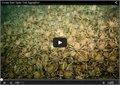 כמות אדירה של סרטני ים