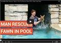 אנשים מצילים צבי קטן מהבריכה