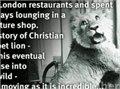 האריה כריסטיאן , סיפור מהמם